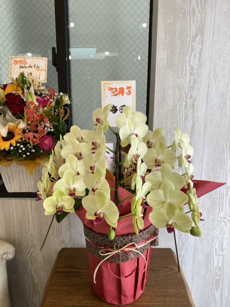 開店祝い胡蝶蘭
