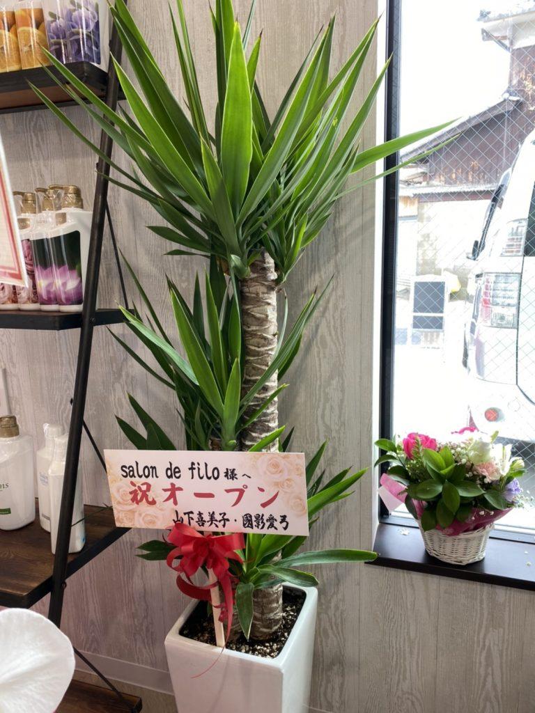 開店祝い観葉植物