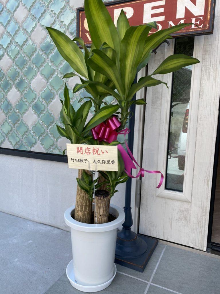 開店祝いの観葉植物頂きました
